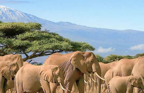 Search for your destination wedding in Tanzania